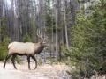 Elk-Fall RMNP.jpg