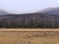 Elk Rut-RMNP 10-29-13.jpg