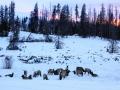 Elk-Grand Lake.jpg